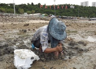 Residents in Laem Bali Hai, South Pattaya, dig for clams at the pier.