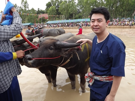 Chonburi MP Poramet Ngampichet prepares to plow the fields for the crowd's entertainment.