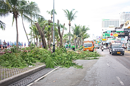 Creating eye soars in the name of security - city workers continue to chop away at trees along Beach Road.