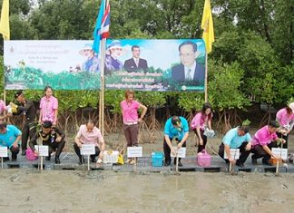 Chonburi residents and public officials plant trees in Ban Suan to honor HM the Queen.