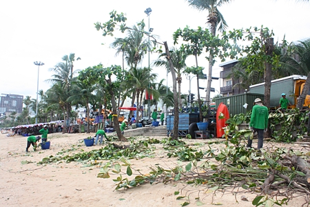 Workers from the Engineering Department trim trees along Pattaya Beach Road.