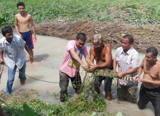Animal-control officers and residents manage to catch one of the escaped crocodiles, but as many as 100 escaped their pens.