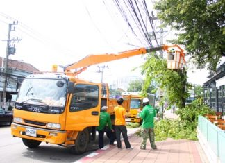 City workers trim tree branches away from power lines in Naklua.
