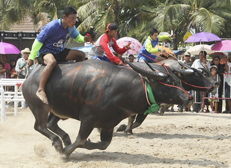 Nose to nose out of the starting gate. (AP Photo/Sakchai Lalit)