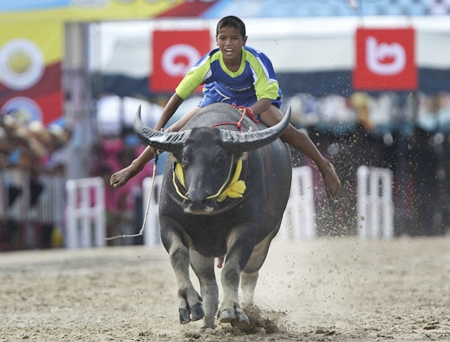 """Although he is just a young boy, this jockey seems to be right at home racing his monstrous """"thoroughbred"""". (AP Photo/Sakchai Lalit)"""