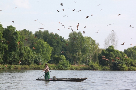 A fisherman feeds the red hawks, which can be found in abundance here.