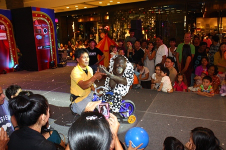 Now there's something you don't see every day - an orangutan riding a bicycle like this one on Children's Day at Central Festival Pattaya Beach.