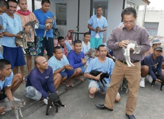 Warden Thanat Hrikanbanchon inspects one of the many cats, as inmates make their case to keep them.