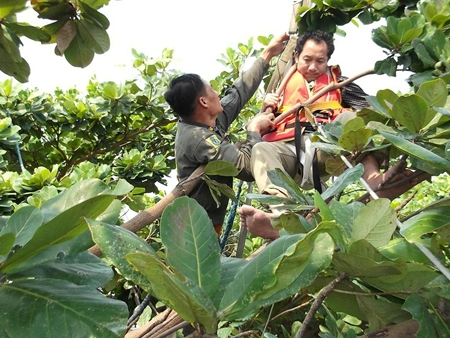 A rescue worker tries to free Zhongping from his entanglement in a tree.