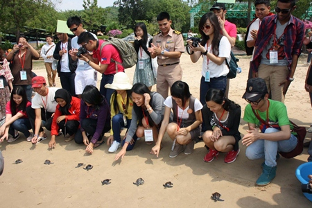 Young visitors from ASEAN countries release turtles into the sea.