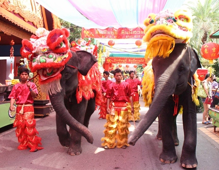 Nong Nooch Tropical Garden elephants are dressed up in Chinese lion gear for a lion dance parade during the Chinese New Year holiday.