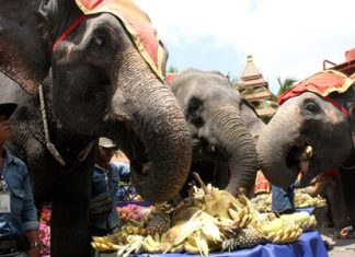 Elephants enjoy a festive meal on Thai Elephant Day at Nong Nooch Tropical Gardens.