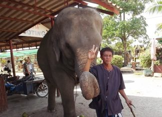 Ya Sukhree of Surin and his 16-year-old cow Birdy greet visitors at the Pattaya Elephant Village.