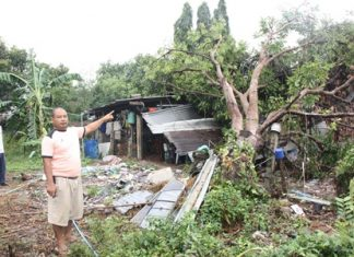An overnight tropical storm April 16 in Sattahip caused this large mango tree to topple onto a Thongthip Market-area home.