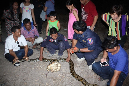Sawang Rojthummasathan Foundation officers remove the 3-meter-long python and its eggs to relocate them far from residential areas.
