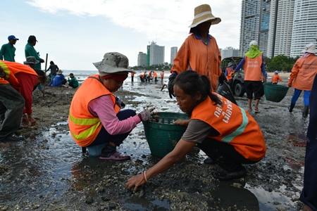 City workers are back picking up smelly and sharp rocks from Wong Amat Beach.