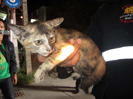 Rescuers pulled this little kitten out of a sewage pipe on Soi Paniedchang 6.