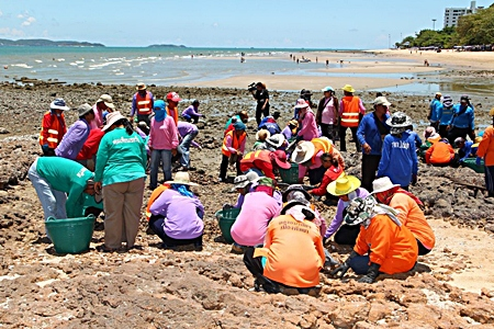 Public health and environment staff collect stones and pick up garbage off the beaches. Department officials said they will crack down on litterbugs polluting area beaches and will step up shoreline cleaning.
