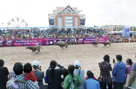 Buffalo riders compete during an annual buffalo race in Chonburi, Friday, Oct. 18. The annual race is a celebration among rice farmers before harvesting rice. (AP Photo/Apichart Weerawong)