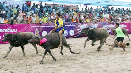 Some of the buffalo jockeys fell off their animals during the race. (AP Photo/Apichart Weerawong)