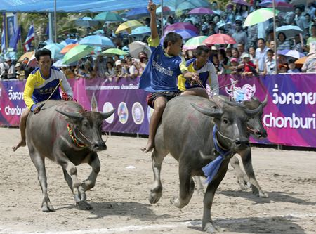 A young Thai buffalo rider, center, raises his arm after winning a preliminary round race during. (AP Photo/Apichart Weerawong)