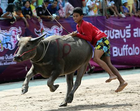 A young Thai rider jumps off the back of his buffalo during the annual buffalo races in Chonburi. (AP Photo/Apichart Weerawong)
