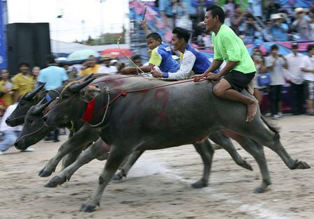 Buffalo riders cross the finish line during. (AP Photo/Apichart Weerawong)