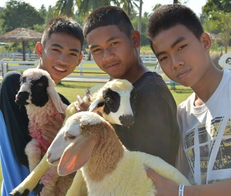 Even the teenage boys were impressed with the wooly animals.
