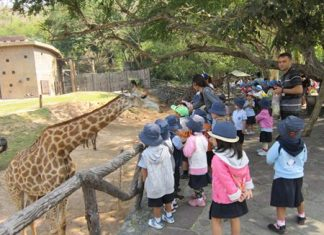 GIS students had the chance to feed a giraffe.