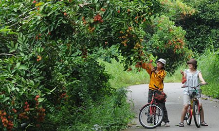 Image result for THAILAND  FRUIT ORCHARD