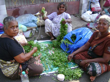 Preparing the basil leaves to pay respect to God Shiva.