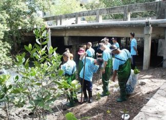 Youths from the Chonburi Juvenile Detention Center plant mangrove trees to learn how to improve the environment.