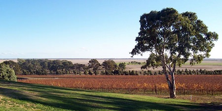 Australian vineyards (Photo: Scott Davis)