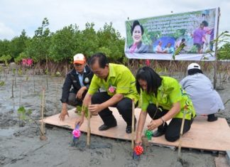 Sub-district Mayor Taweep Goraneeyakit leads government workers, students and residents of Chonburi's Ang Sila Sub-district to plant mangrove trees in honor of HM the Queen's 82nd birthday.