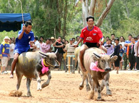Buffalos & riders charge down the track with only victory in mind.
