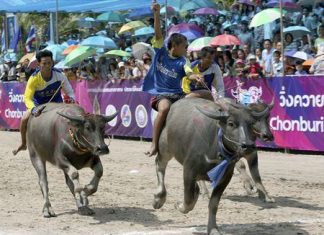 The thunder of hooves will once again echo around the Chonburi provincial government offices when the annual festival kicks off this weekend.