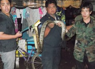 Rescue workers were able to capture the python to release it into the wild.