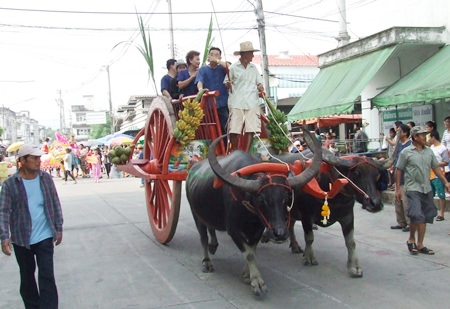 Water buffalo with magnificent horns lead the opening parade.
