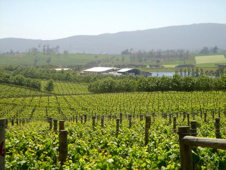 Castle Creek vineyards