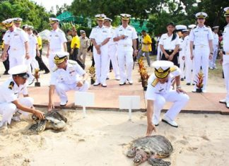 Hawksbill sea turtles Kalyakorn, 12, and Amornrat, 8, are released into the sea to commemorate HM the King's 87th birthday.