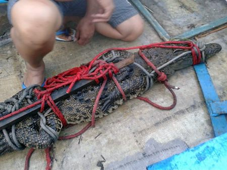 Officials were able to capture this crocodile after it took up residence near Pattaya Kart Speedway off Thepprasit Road.