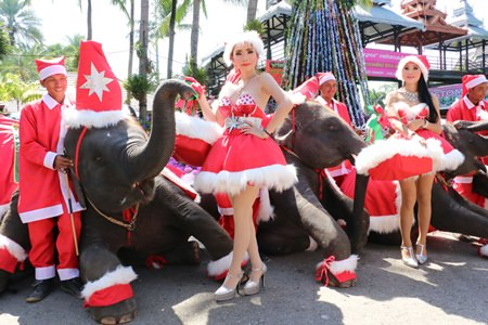 Pretty girls and elephants wish everyone a Merry Christmas at Nong Nooch Tropical Gardens.
