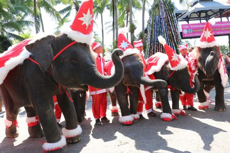 Nong Nooch Tropical Garden celebrated Christmas with young elephants dressed like Santa Claus.
