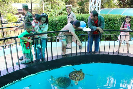 The sea turtles are a big attraction for the whole family at the Sea Turtle Conservation Center in Sattahip.