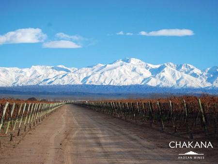 Vineyards near the Andes (Photo: © Chakana Wines)