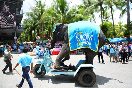 An elephant at Nong Nooch Tropical Gardens performs for the Ride for Mom event.