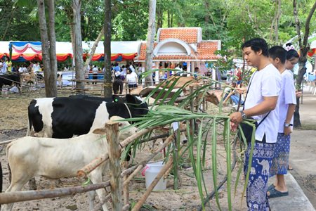 Ninety-nine cows were spared during the annual merit making ceremony to honor HM the Queen's birthday.