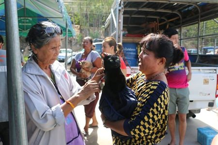 Nongprue Sub-district offered sterilization shots and vaccine jabs for cats and dogs, including any stray animals brought to the shelter.