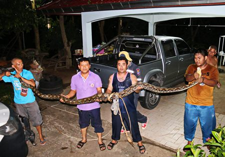 Rescue workers show off the huge python they pulled from under Boonsom Ramnutch's house.