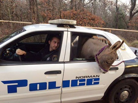 (Robin Strader/Norman Police Department via AP)